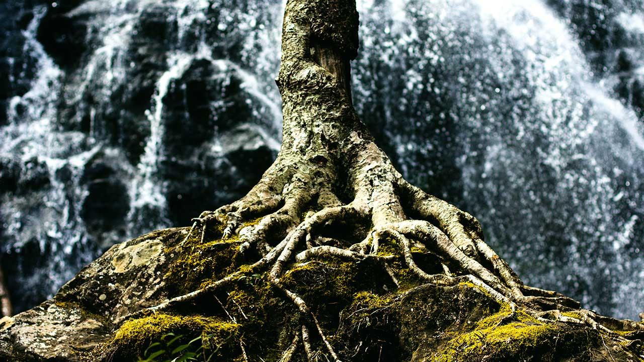 Ein Baum mit dem sichtbaren Teil seiner Wurzeln