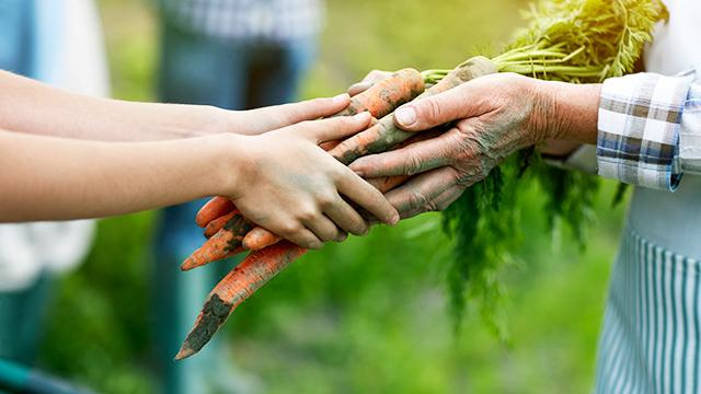 Handel mit landwirtschaftlichen Produkten